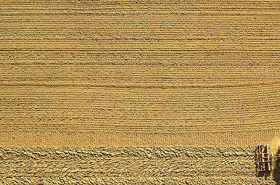 Agriculture Producers Eligible for Direct Payments Need to Act Now